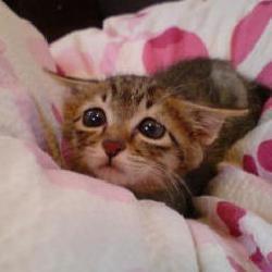 sad_kitten2