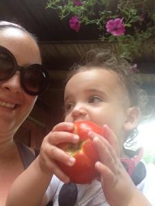 p wiz tomato haz